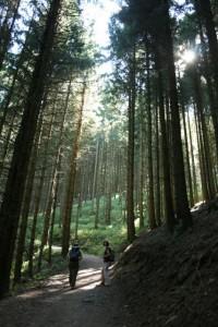 Himelreich forest